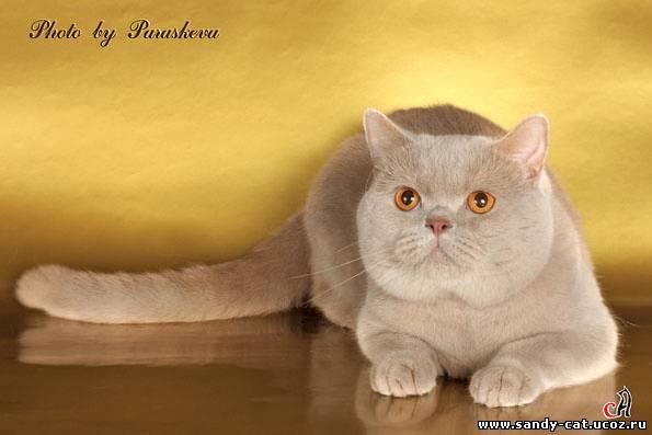 Продажа котят 86695